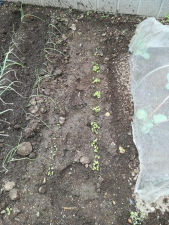 畑の固い土
