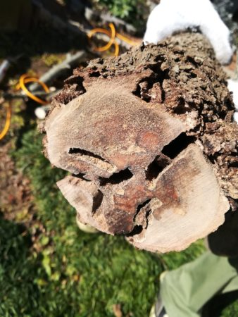 幹の中の穴