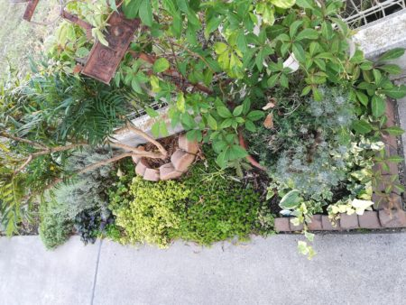 植栽とセダム