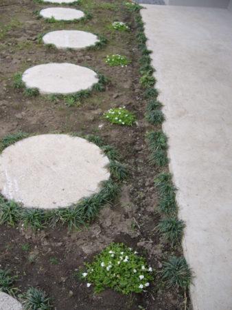 リュウノヒゲとサギゴケ植えた当初