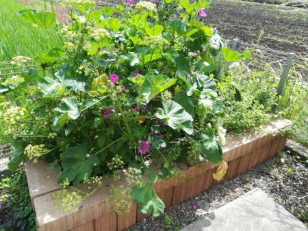 現在の花壇