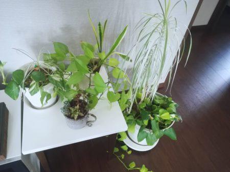 現在の観葉植物