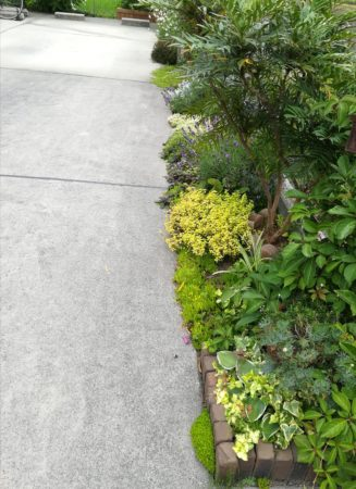 駐車場と植栽