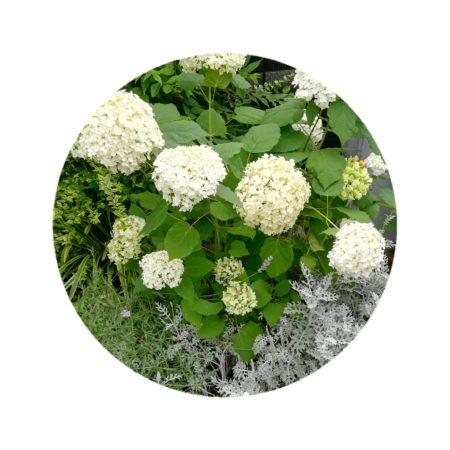 白い花のアイコン