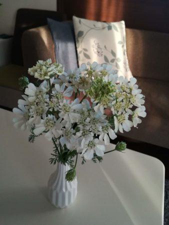 ホワイトレース生け花